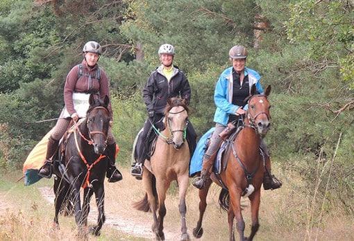 Drei Pferde mit Reitern während der L-Woche in der Lüneburger Heide