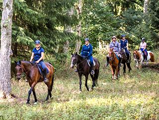 Gruppe von Reitern mit Pferden beim Reiten