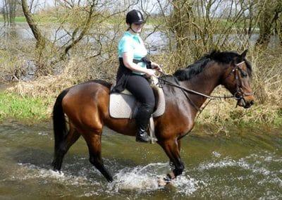 Reiterin reitet mit ihrem Pferd durch ein Fluss in der Lüneburger Heide