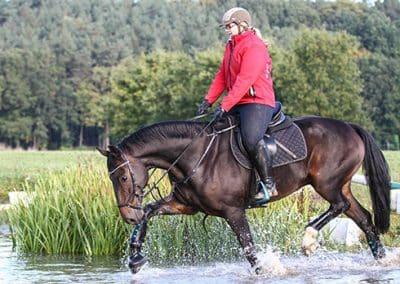 Pferd mit Reiterin schreitet durch einen Wassergraben auf dem Geländeplatz.