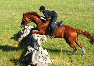 Reiter und Pferd springen über ein Hindernis auf dem Geländeplatz.