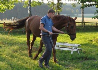 Junger Mann mit Pferd hat Unterricht in der Reitschule Landhotel Pferdeschulze