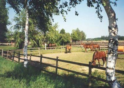 Mehrere Pferde auf der Weide der XXL Offenstallung vom Landhotel Pferdeschulze