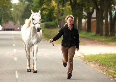 Frau läuft mit einem weißen Pferd auf der Straße am Landhotel Pferdeschulze