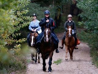 3 Pferde mit Reiter unterwegs während der Adventure Week