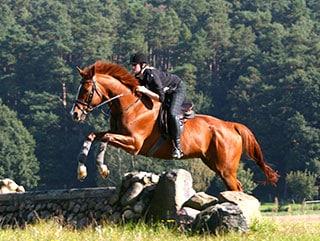 Pferd mit Reiter springt über ein Hindernis während des Geländetrainings