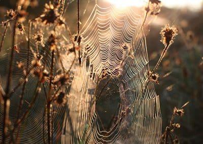 Spinnennetz im stimmungsvollen Licht in der Spinnennetz
