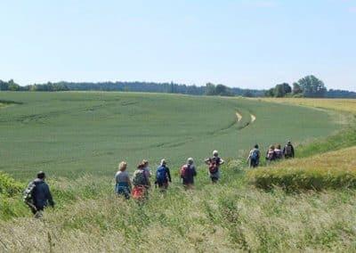 Wandergruppe in Lüneburger Heide
