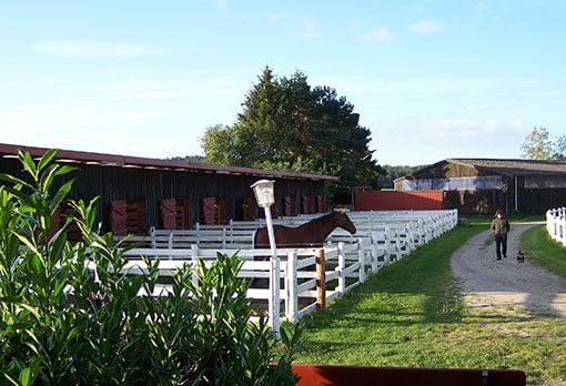 Pferd in Paddockbox im Landhotel Pferdeschulze.